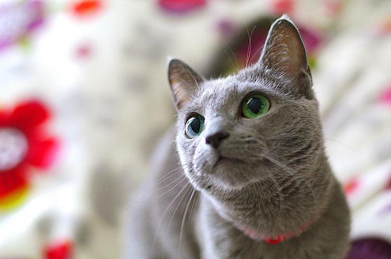 cat-eye_s.jpg